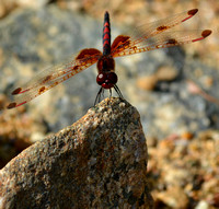 Perched Calico Pennant
